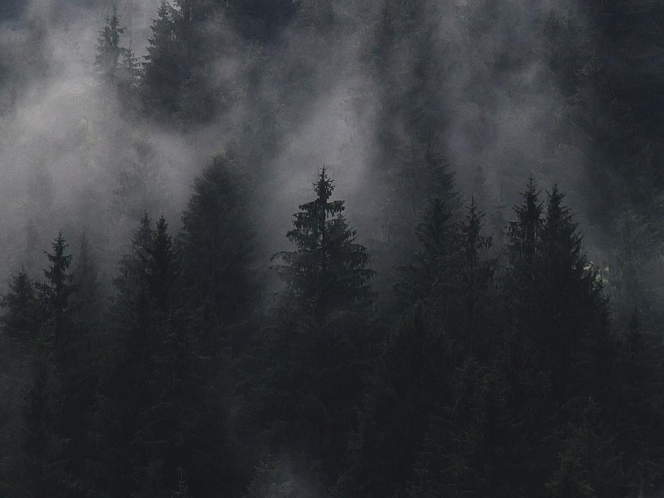 Secret Forest #2